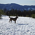 More_snow_pictures_160